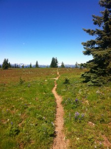 Oh my perfect trails.