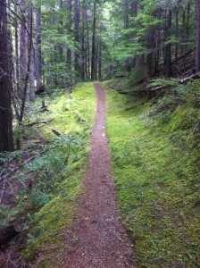 More perfect forest single track.